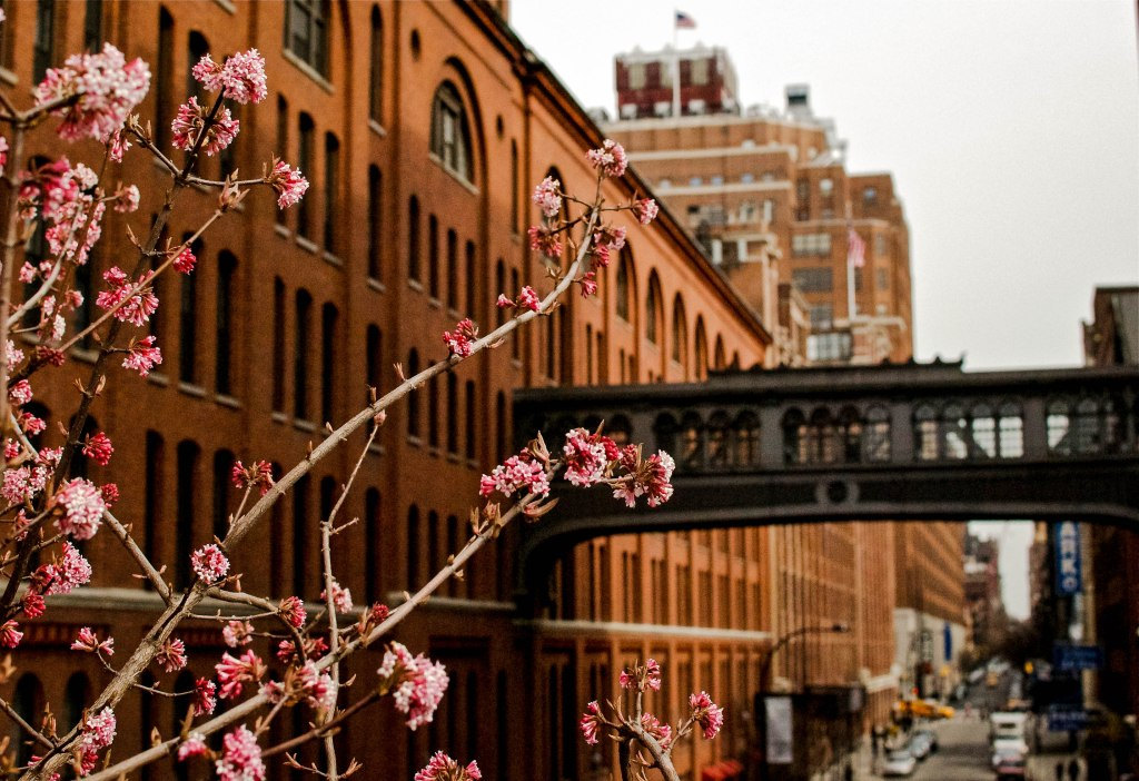 Cherry blossoms and West 15th St.
