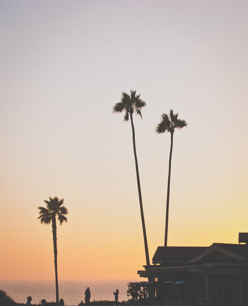Palms and sunsets