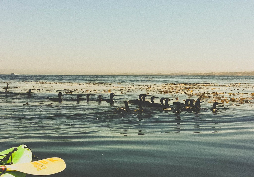 These cormorants popped out of deep water next to us, then completely disappeared twenty seconds later