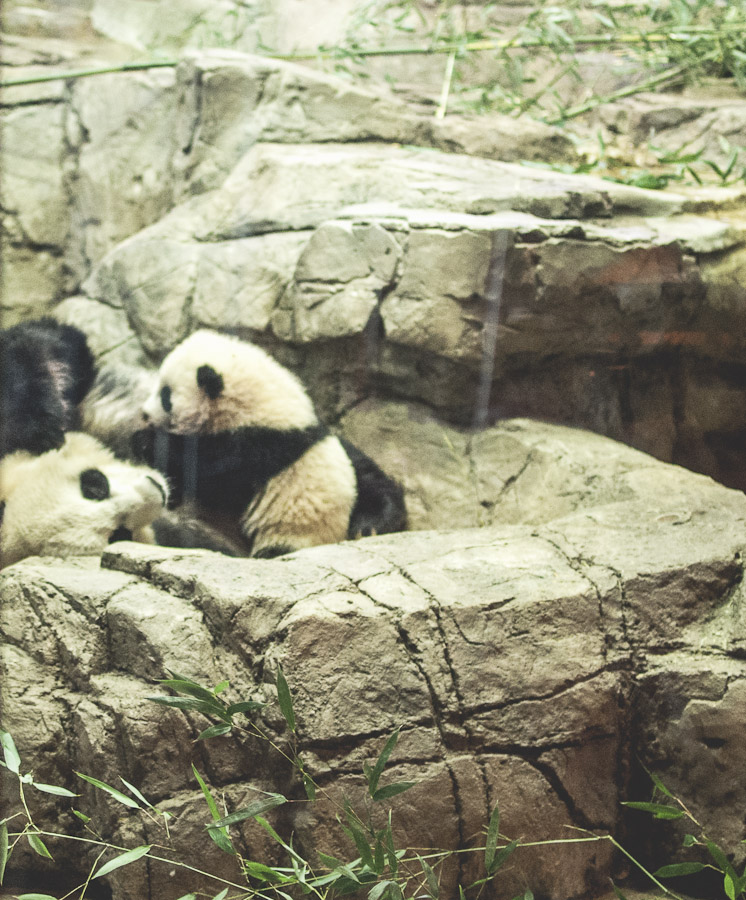 Mei Xiang and Bao Bao