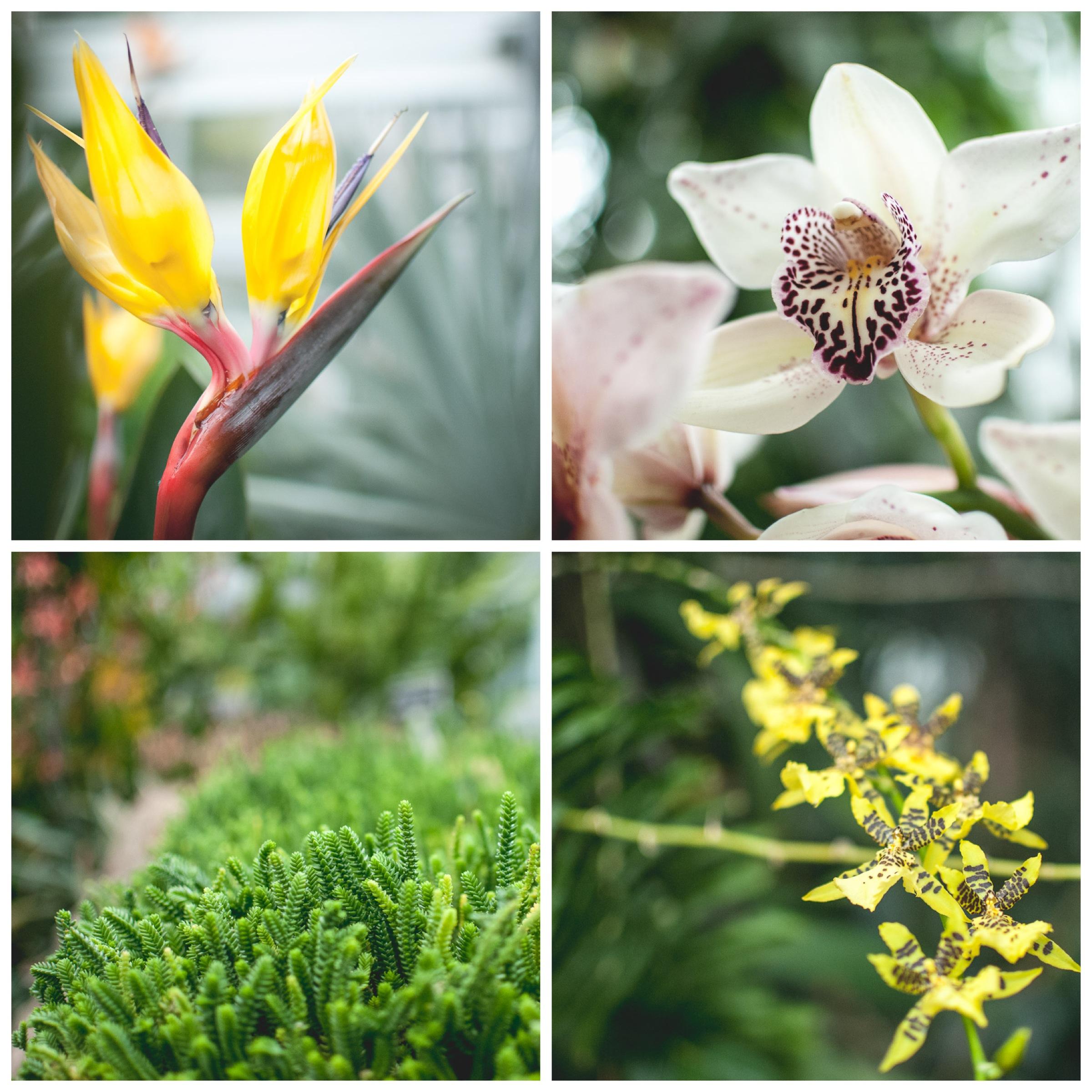 2014.Botanical.Gardens.12