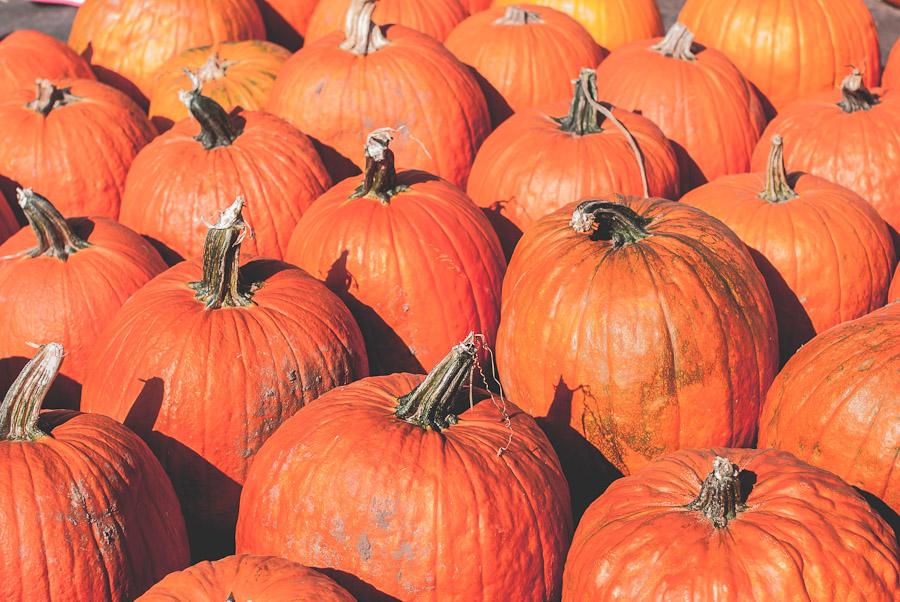 2014.Pumpkins.11