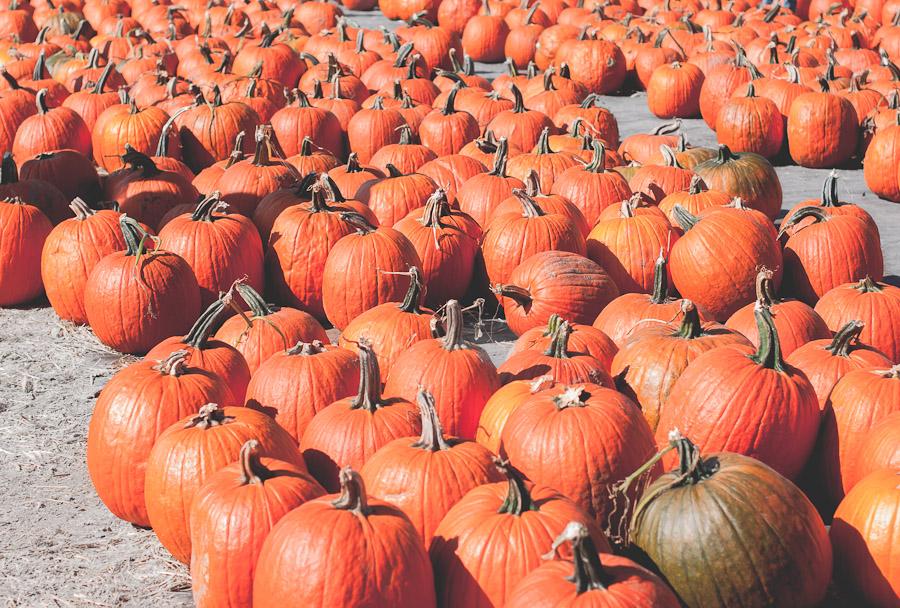 2014.Pumpkins.10