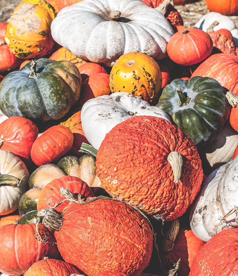2014.Pumpkins.7