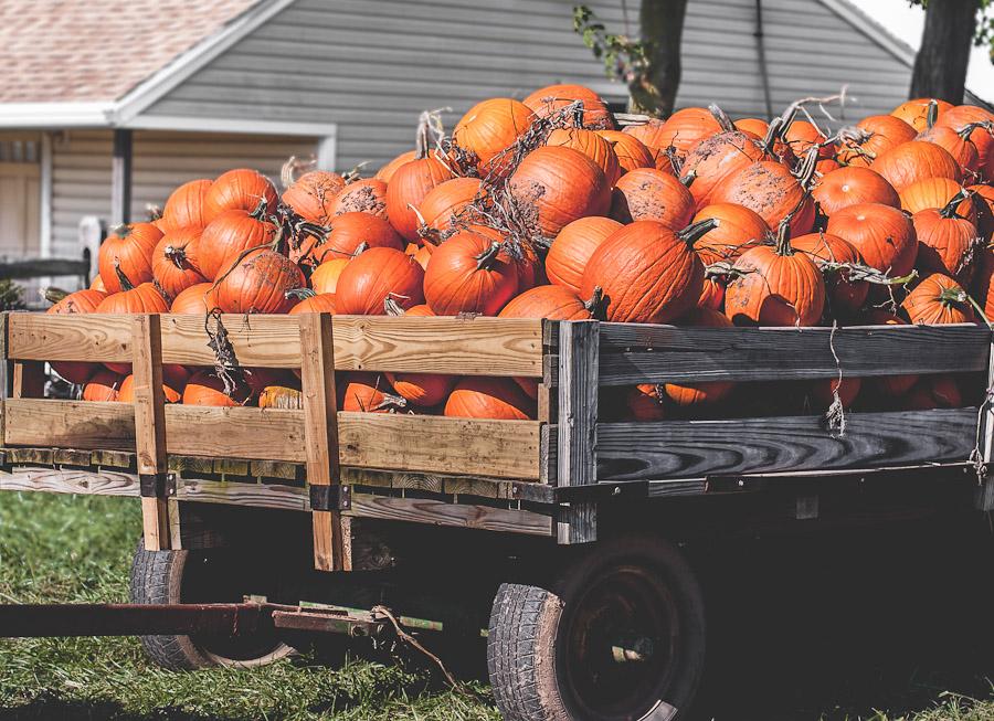 2014.Pumpkins.6