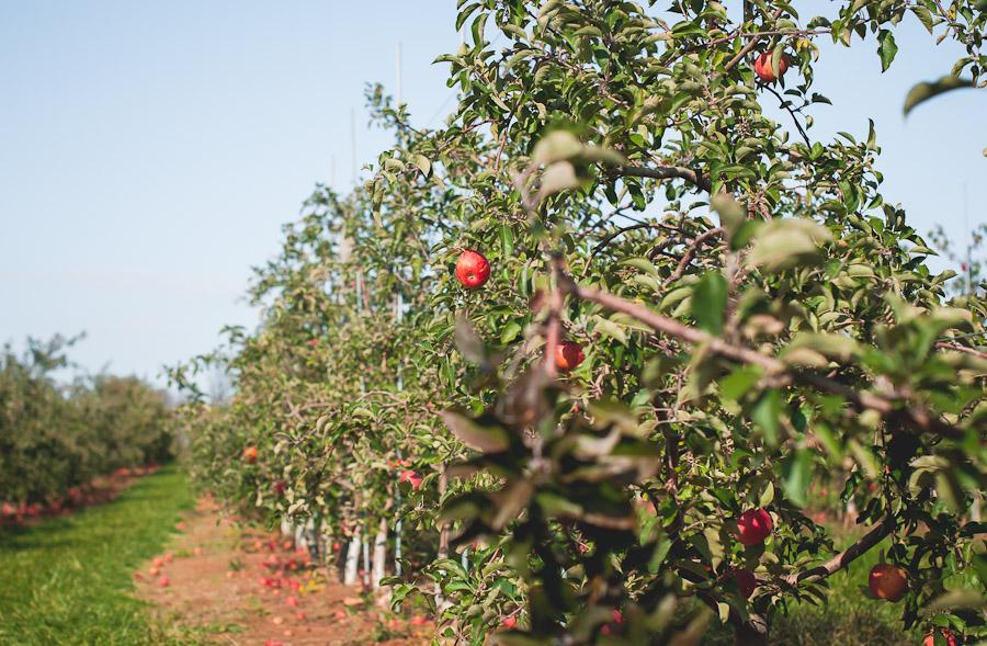 2014.Apples.4