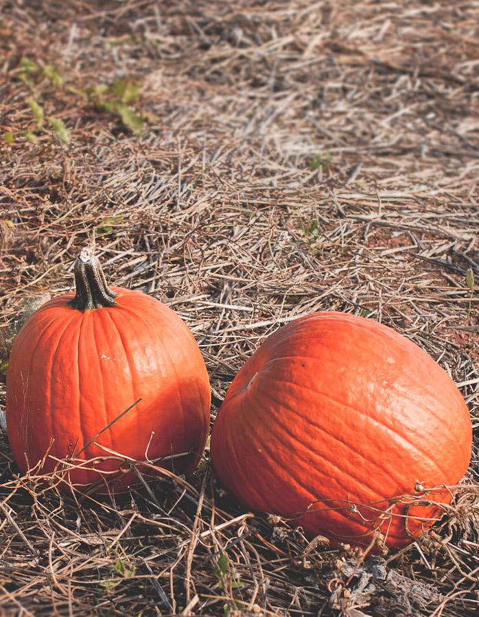 2014.Pumpkins.1