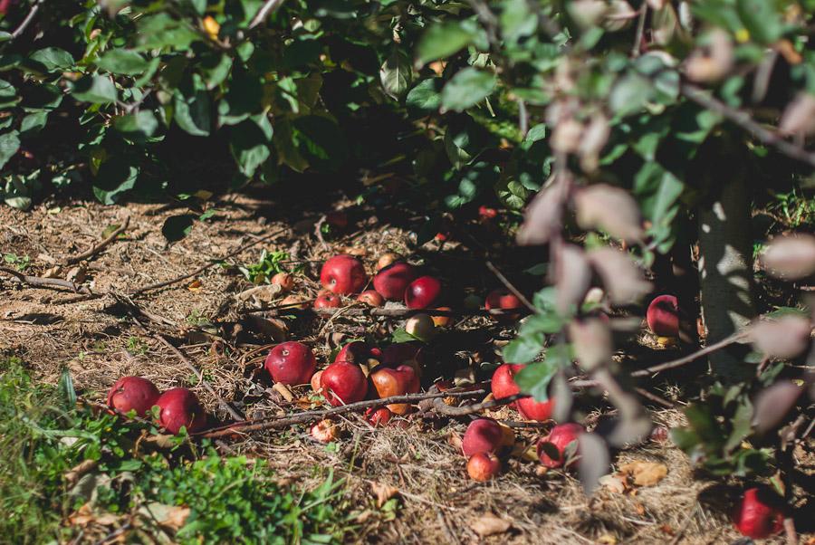 2014.Apples.2