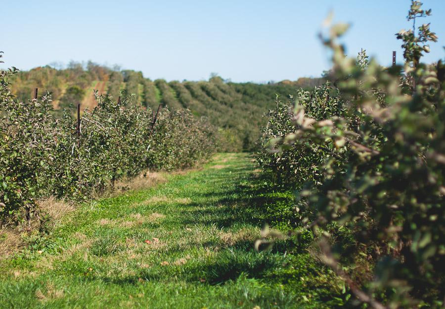 2014.Apples.1
