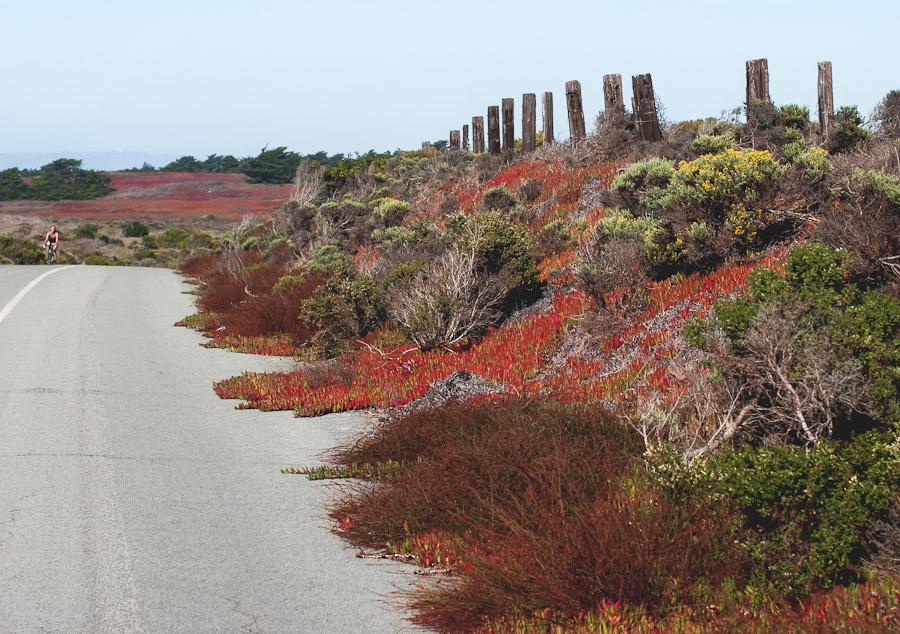 2014.Dunes.6