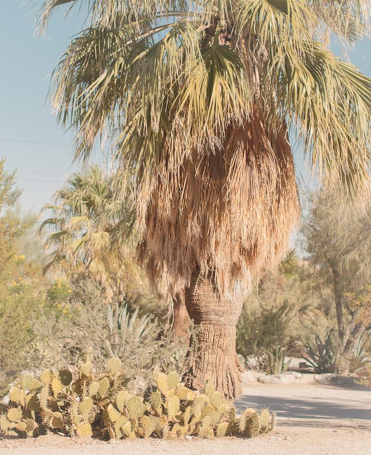29 Palms Inn | la Valerosa